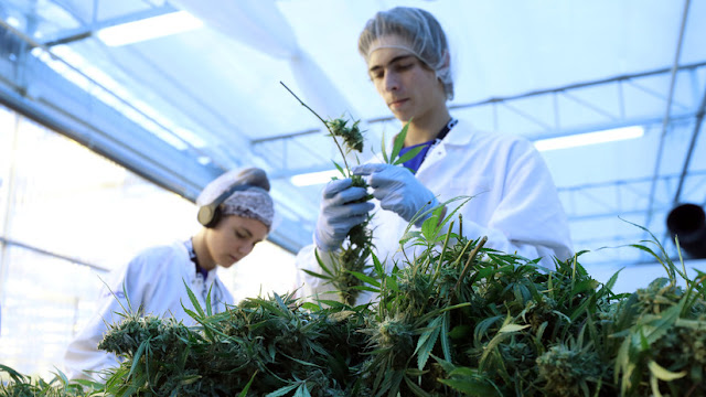Portugal: Entra en vigor la normativa que permite consumir marihuana con fines médicos