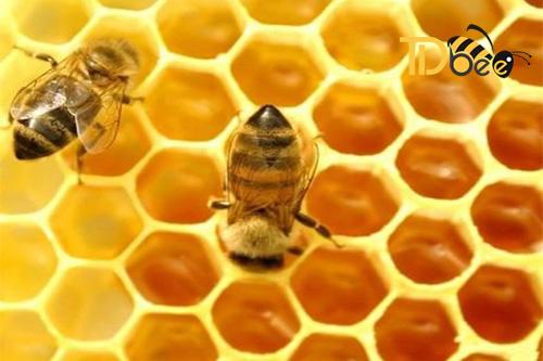 sữa ong chúa có phải là mật ong không