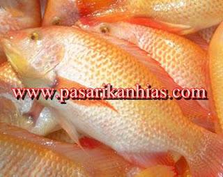 Jual Bibit Unggul Ikan Nila Harga Murah