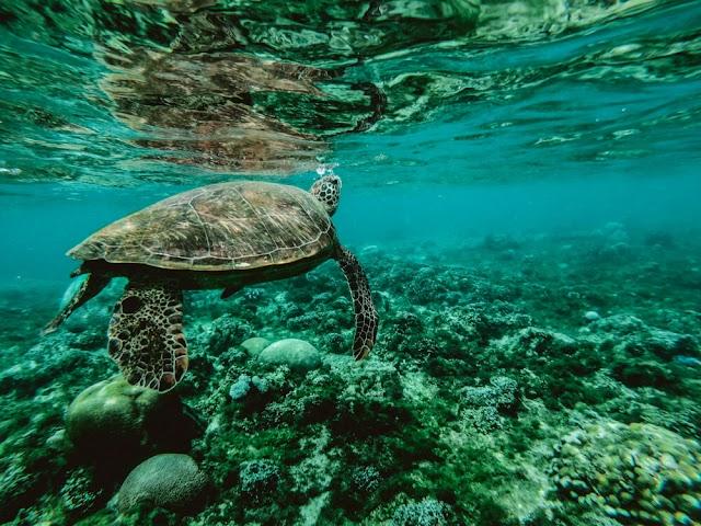 Menjelajahi Keajaiban Hidup Terbesar Dunia, Great Barrier Reef