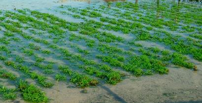 Marine Agriculture