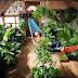 El invernadero del futuro - Tú propia comida para todo el año - Guía practica