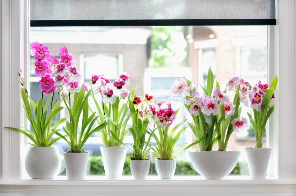 Trucos Para Cuidar Mejor Tus Plantas De Interior - Plantas-interior-con-flor