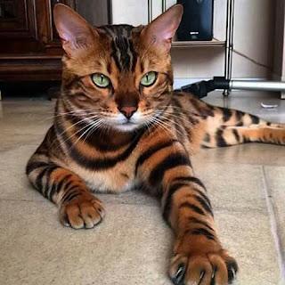 Foto de un gato raro