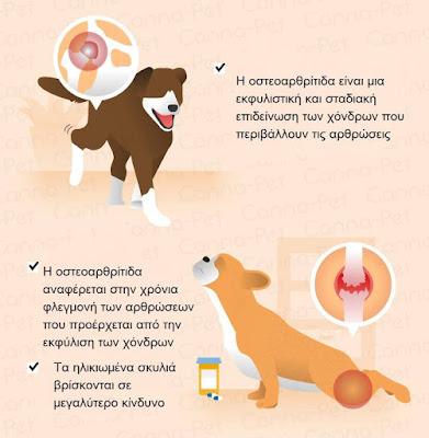 Η οστεοαρθρίτιδα στον σκύλο: αίτια, συμπτωματολογία και διαχείριση