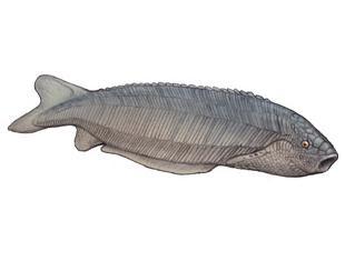 Pharyngolepis