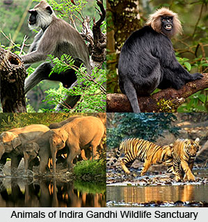 The variety of animals at sanctuary and park that is a main tourist place in Coimbatore.