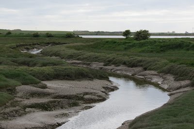 A channel in the salt marsh filling up with tidal water.