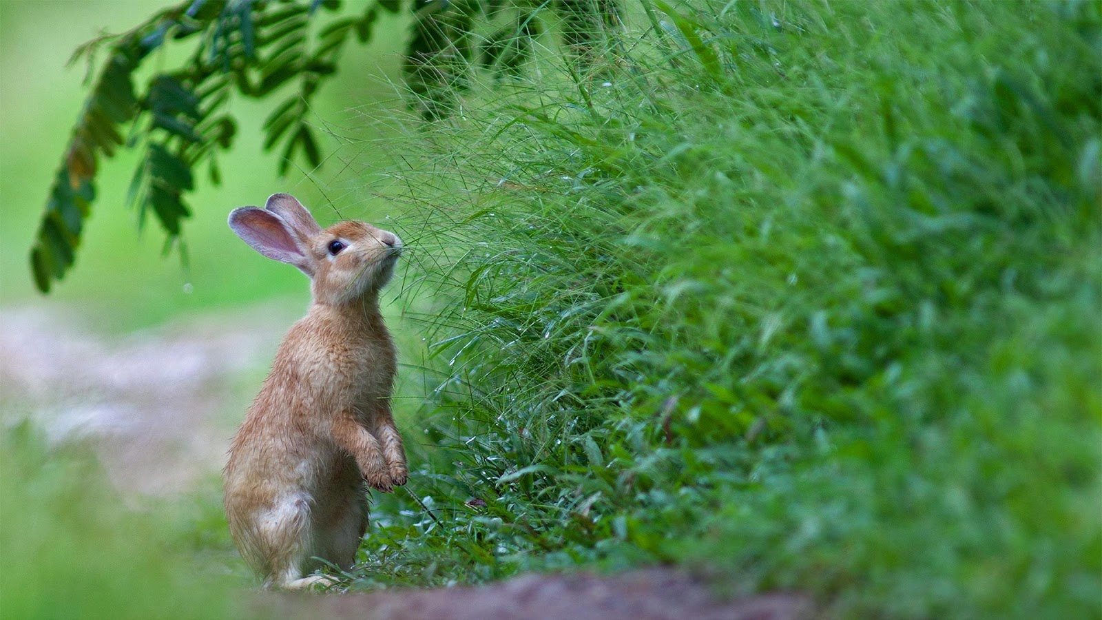 A rabbit in the grass © wisan224/Getty Images Plus