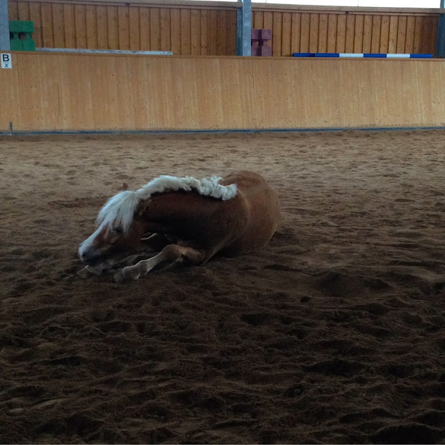 Is Your Horse In A Stable Condition?