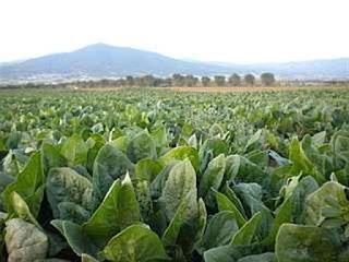 Γνώρισε τους αγρότες που έχουν ήδη ξεκινήσει την επανάσταση στην τροφή μας