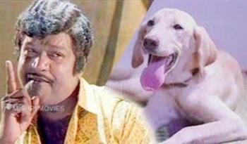 Goundamani Senthil Comedy | Goundamani Senthil Super Comedy Collection | Thalattu Full Comedy