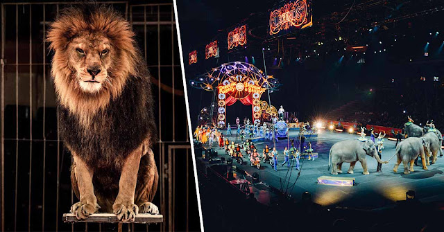 The United Kingdom Will Ban Performances Involving Wild Animals in Circuses