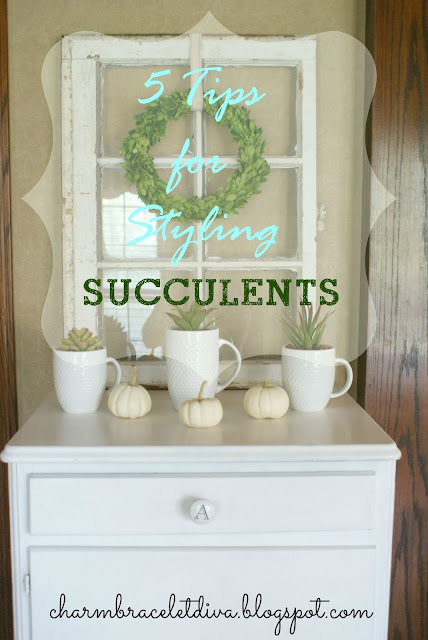 Succulent Display Tips