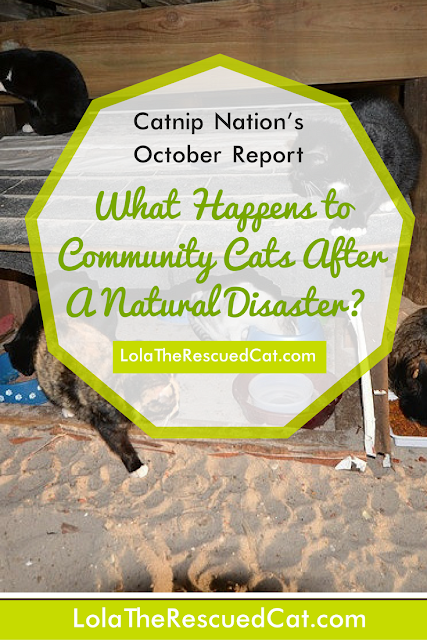 Catnip Nation Documentary