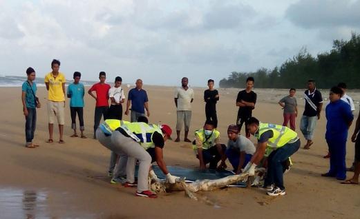 Mayat Reput Ditemui Terdampar Di Pantai