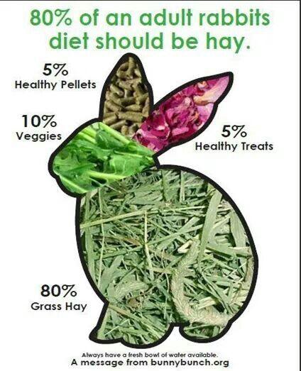 hay adalah Makanan kelinci hias  yang benar Sehat dan Terbaik