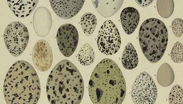 Mengapa Telur Berbentuk Oval
