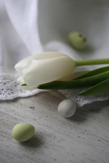 tulips, stilllife, tulppaani, pääsiäinen, easter