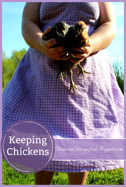 #KeepingChickens #backyardpoultry #chicks #chickens #farm #hobbyfarm