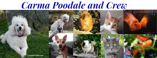 Carma Poodale and family- Photos of all the pets who appear on the blog