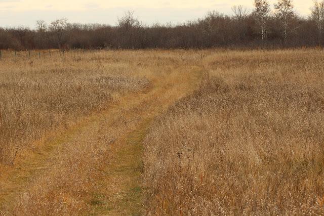 Road through grassy field