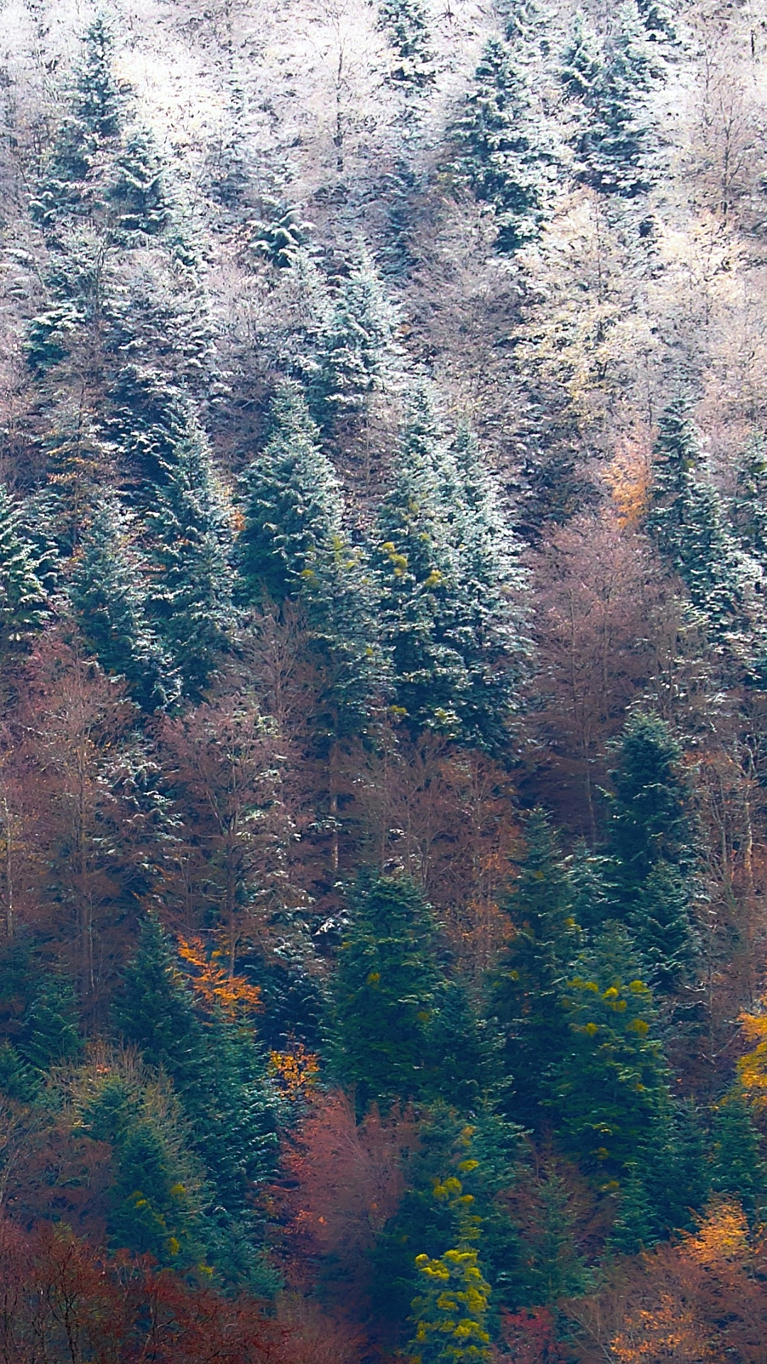 Beautiful nature phone wallpaper