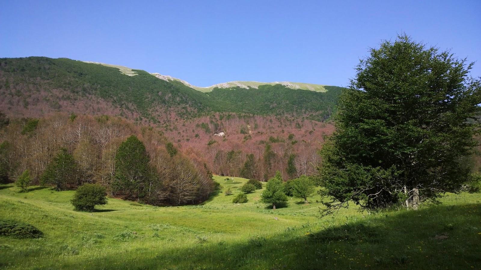 Pollinofantastico serra crispo e il giardino degli dei - Il giardino degli dei ...