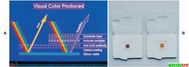 Optical ImmunoAssay (OIA) for group A streptococcus