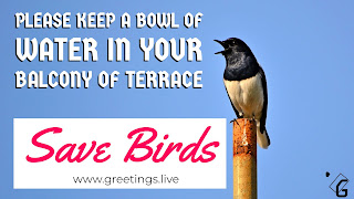Save Birds Please Keep Water for birds