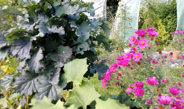 Mon jardin en permaculture au 1er octobre 2018 (vidéo)