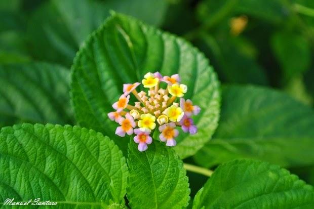 Parco Nazionale del Chitwan, flora