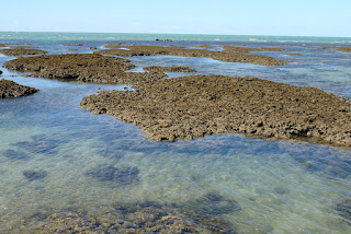 Coral platforms and filtered seawater, Yule Reef