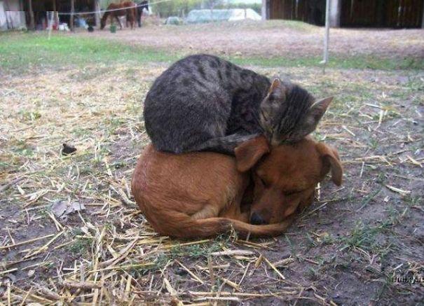 αξιολάτρευτες στιγμές από ζωάκια στον ύπνο τους!!