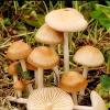 Manfaat Jamur Untuk Kesehatan Mari Kita Simak