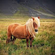 Pony- See Horse HD images free download