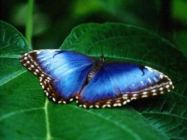 http://4.bp.blogspot.com/-LmDDlToHE1A/TnjwWaC07vI/AAAAAAAAFQY/8woKAO19WCA/s1600/free+nature+photos-2.jpg