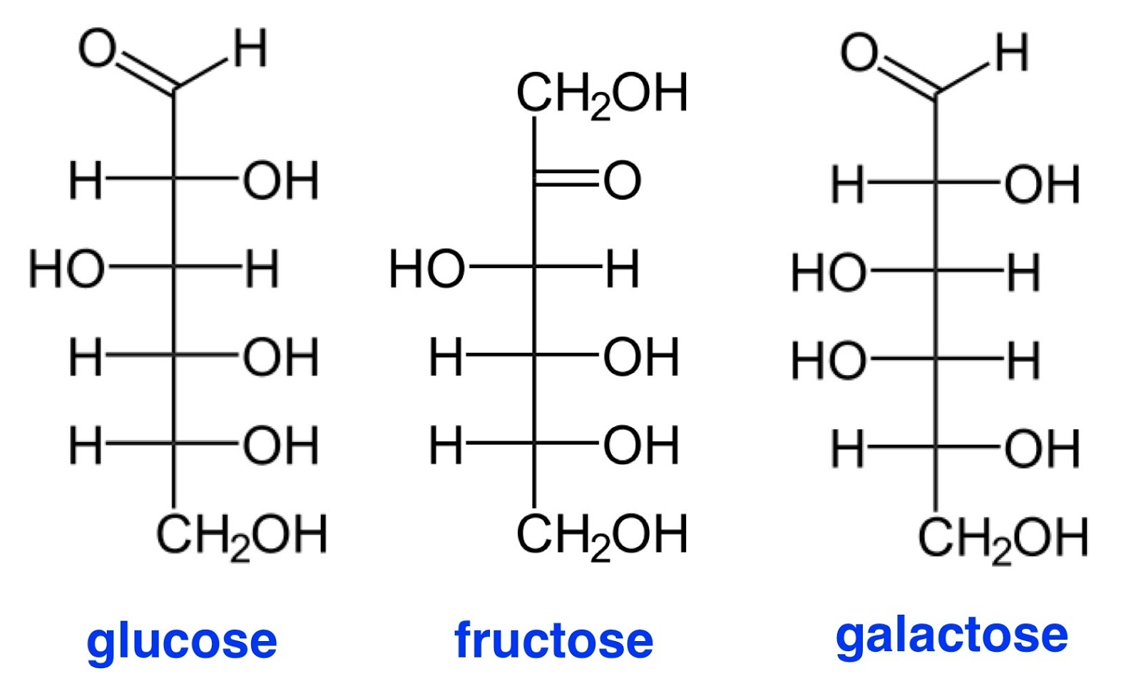 Carbohydrate Structure Diagram Different Parts Of Plant Fructose Molecule Glycogen