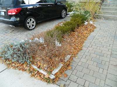 Toronto St. Clair West Village Front Yard Fall Cleanup Before by Paul Jung Gardening Services--a Toronto Organic Gardening Company