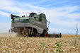 Fendt 6300 C Combine. Estero wheat