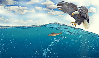 fight or flight eagle and fish image