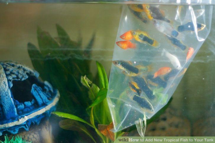 Nên để cá trong bịch khoảng 5-10 phút trước khi cho vào bể thủy sinh