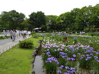 城北菖蒲園のハナショウブ