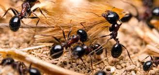 A comer hormigas
