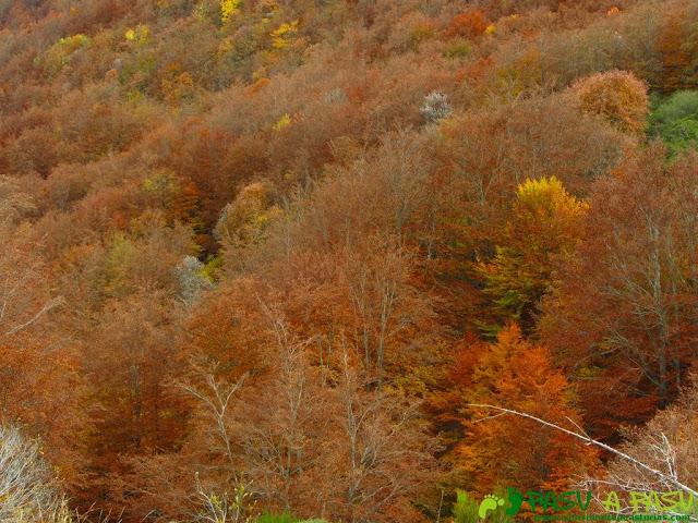 Bosque otoñal en Somiedo
