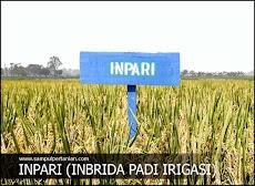 INPARI adalah Inbrida Padi Irigasi (Mengenal varietas Inpari)