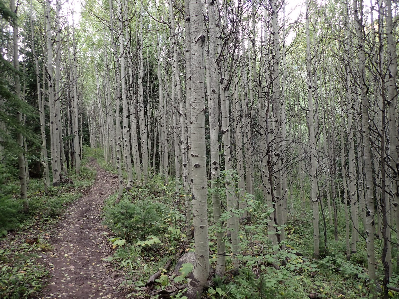 Backpacking Colorado: Trekking to Snowmass Lake in the Maroon Bells