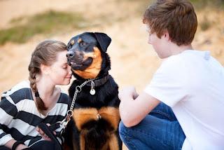 rottweiler life span - help live longer