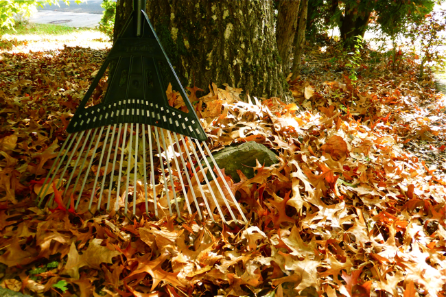 fall, autumn, leaves, rake, raking leaves, yardwork