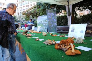 Exposición micológica de Barakaldo